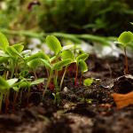 La permaculture, quésaco ?