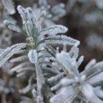 Les Saints de Glace ou le retour du gel le mois de mai
